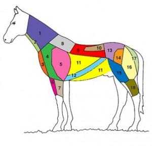 suddivisione parti cavallo